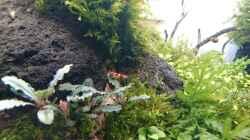 Besatz im Aquarium Am Ende des Flusses