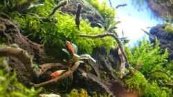 Pflanzen im Aquarium Am Ende des Flusses