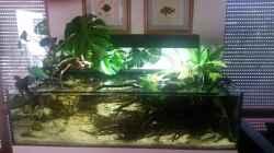 Aquarium Bachlauf Riparium