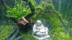 Aquarium Becken 32018