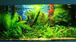 Aquarium Green Forest(aufgelöst)