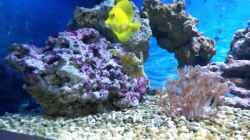 Besatz im Aquarium NewHomeForDoc