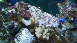 Pflanzen im Aquarium NewHomeForDoc