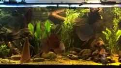 Besatz im Aquarium Lars 900l