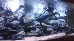 Besatz im Aquarium Malawi´s Playground