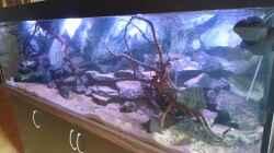 Aquarium Malawi´s Playground