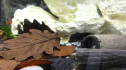 2015-08-07 Die Holzröhren dienen als zusätzliche Verstecke für die Pandas und