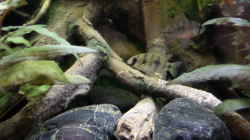 Besatz im Aquarium Becken 32101