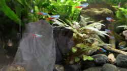 Dekoration im Aquarium Becken 32101