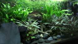 Aquarium Becken 32101