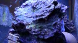 Aquarium Becken 32103