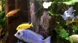 Besatz im Aquarium Becken 3215