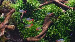 Aquarium 1.400 Liter Diskusparadies