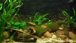 Aquarium Bachaquarium