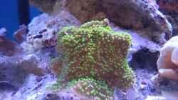 Besatz im Aquarium 140 Liter Meerwasseraquarium