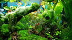 Pflanzen im Aquarium Gaja