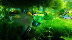 Besatz im Aquarium Gaja