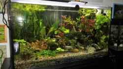 Technik im Aquarium mein kleines Amazonas Scape