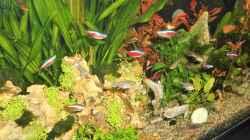 Dekoration im Aquarium mein kleines Amazonas Becken 2.1