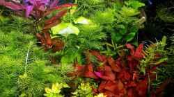 meine Pflanzen im September