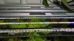seit 23.6. 3X daylight   1X plants LED