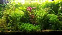 Aquarium mein kleines Amazonas Scape