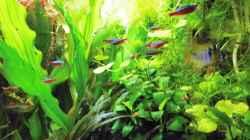 mein kleines Amazonas Becken