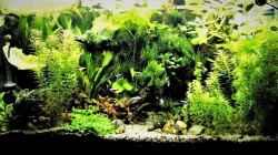 Aquarium mein kleines Amazonas Becken 2.1