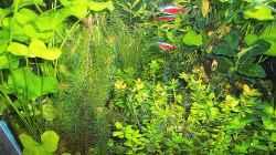 Pflanzen haben sich wieder langsam erholt. Stand - 10 Mai