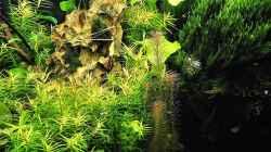 Dekoration im Aquarium mein kleines Amazonas Scape
