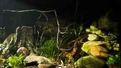 linkes Becken `Smaugs Einöde` (am Anfang des Beleuchtungstest)