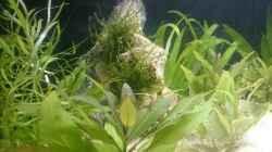 Aquarium Perlhuhntümpel