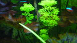 Pflanzen im Aquarium Amazonas Flusslauf (nur noch Beispiel)