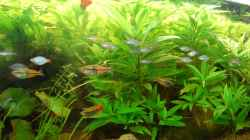 Besatz im Aquarium Becken 3229