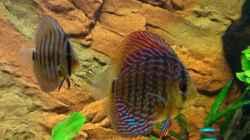 Besatz im Aquarium Fluss Ufer (Nur noch als Beispiel)