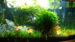 Aquarium Juwel Vision 180