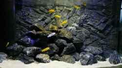 Besatz im Aquarium Malawi Mbuna