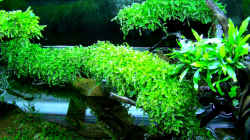 Pflanzen im Aquarium Schulaquarium