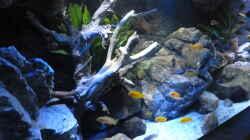 Dekoration im Aquarium Becken 32316