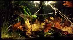 Aquarium Kleine Amerika Räuberwelt