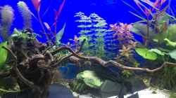 Aquarium Deep Blue Sea