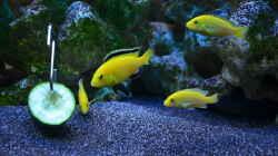yellows mit lecker Gurke