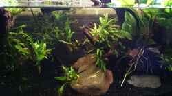 Pflanzendickicht