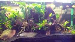 Dekoration im Aquarium Channa Home (nur noch als Beispiel)