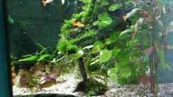 Blick von rechts ins Aquarium