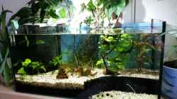 Gesamtansicht vom Aquarium