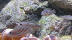 Aquarium Becken 32520