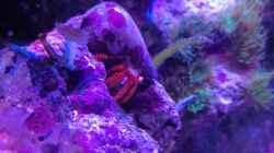 Besatz im Aquarium Riff