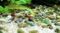 Besatz im Aquarium green quarry