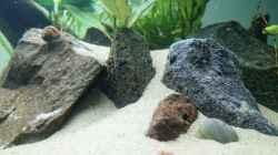 Dekoration im Aquarium green quarry